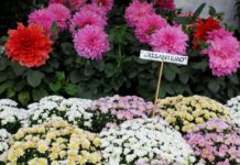 Festival de las flores de primavera