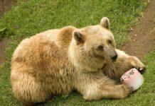 #Awww dan paletas de hielo a animales de zoológicos chilangos