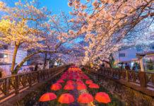 Festival de Sake y Sakura