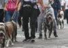 ataque de un pitbull en la Benito Juárez