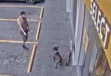 robo de un bulldog