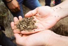 recolectar escamoles en Hidalgo