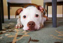 ¿Buscas departamentos que acepten mascotas? ¡En estas colonias hay!