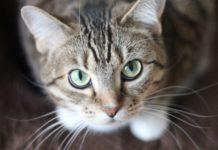 expo vive gatito 2019
