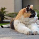 ella-es-carmen-la-senora-de-los-gatos-de-palacio-nacional
