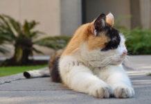 los gatos de palacio nacional