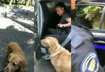 Policías arrestan a una mujer, tras ver a sus perros en una fuente