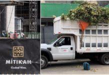 tala de 60 árboles por empleados de mitikah