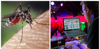 dubstep contra los mosquitos