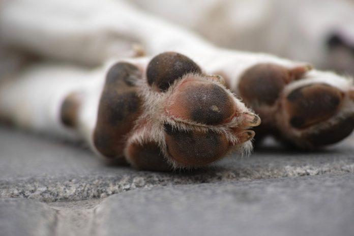 muerte de una mascota