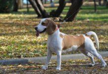 ¡Qué perrón! Habrá cinco parques caninos en Venustiano Carranza