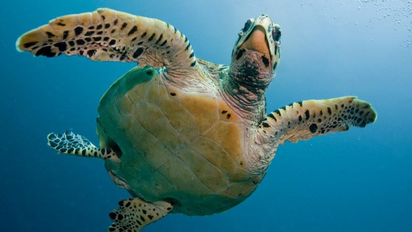 temporada de tortugas marinas en México
