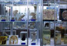 Museo de Anatomopatología Veterinaria