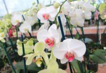 cómo cuidar orquídeas