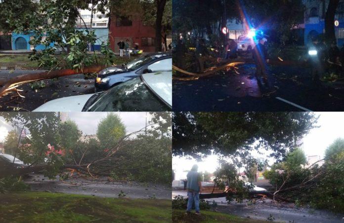 ¡Evita la zona! Lluvia provoca caída de árbol en Viaducto