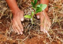 festival de reforestación en cdmx