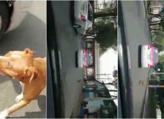 abandona a su perro en Azcapotzalco