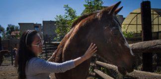 sedena vendera caballos