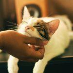 5-lugares-para-adoptar-gatos-en-cdmx