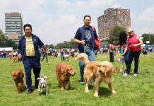 jornada de Bienestar Animal 2019