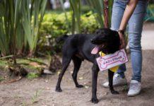 Perros que buscan ser adoptados