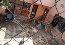 perros maltratados en la colonia Lindavista