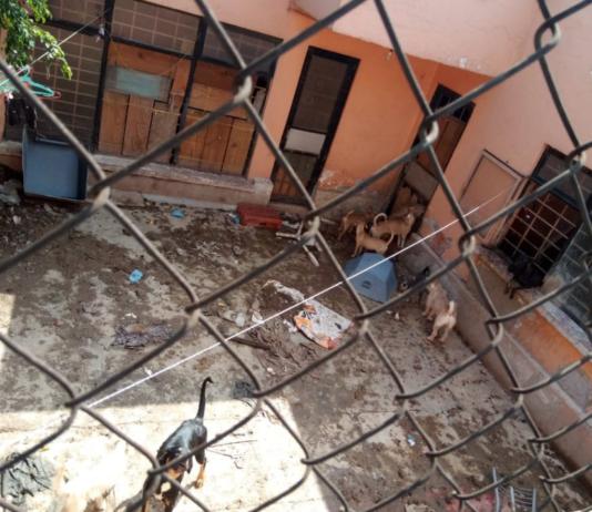 ¿Qué pasó con los perros rescatados en Lindavista?