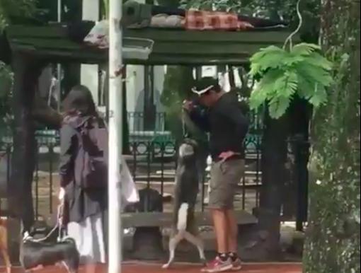 cuidador de perros asfixia a un husky