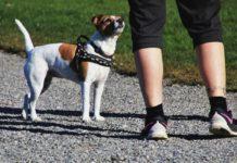 Venustiano Carranza tendrá jornadas de adiestramiento canino gratuitas