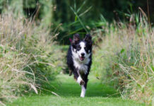 carrera canina en la marquesa