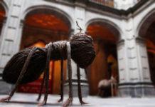 expo de insectos en san ildefonso