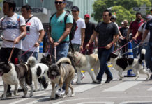 Proponen hacer magno paseo con mascotas en CDMX cada dos meses