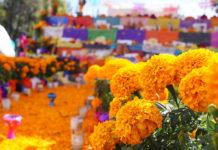 Acopio Flores de Cempasúchil