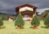 Dónde comprar árboles de Navidad en maceta