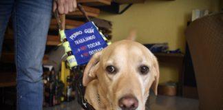 Perro guía en la CDMX