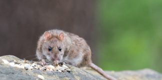 campaña contra fauna nociva en la cuauhtémoc