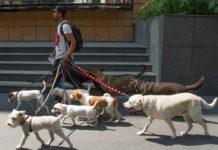 Paseadores de perros en la CDMX