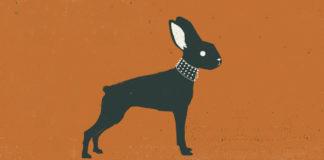 La suerte es un conejo que te da órdenes es el primer libro de cuentos de Eduardo Rabasa