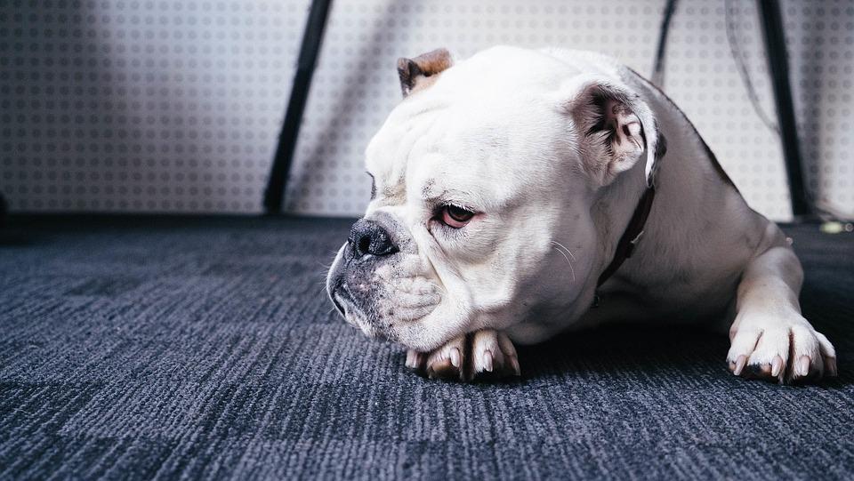 armale-una-playlist-a-tu-mascota-con-spotify-pets-%f0%9f%90%b6%f0%9f%90%b1%f0%9f%8e%b6