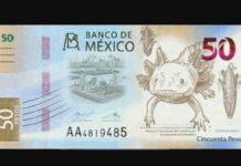 Ajolote en billetes de 50 pesos