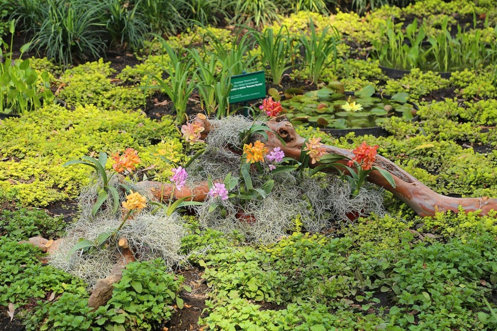 escapa-del-estres-con-los-jardines-botanicos-en-la-cdmx