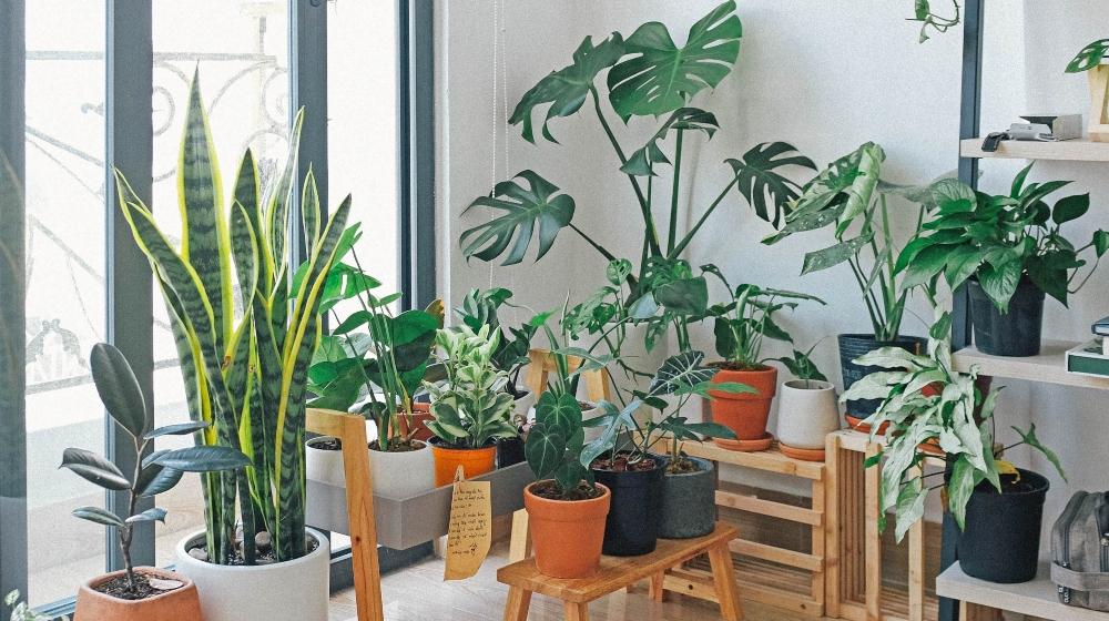 ¡Dale a la jardinería! Consigue plantas a domicilio 🌻🌵