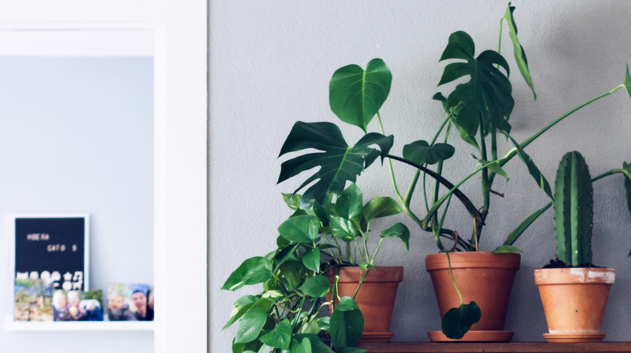 ¿Matas todo? Plantas resistentes y fáciles de cuidar 🌿