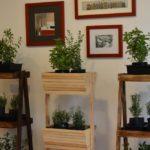 huerto-de-plantas-aromaticas-para-cocinar-a-domicilio-%f0%9f%8c%bf%f0%9f%9a%b2%f0%9f%9a%97
