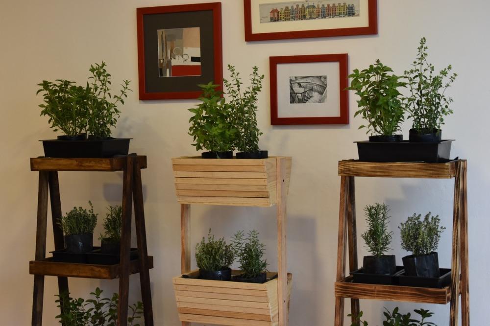 Huerto de plantas aromáticas (para cocinar) a domicilio 🌿🚲🚗