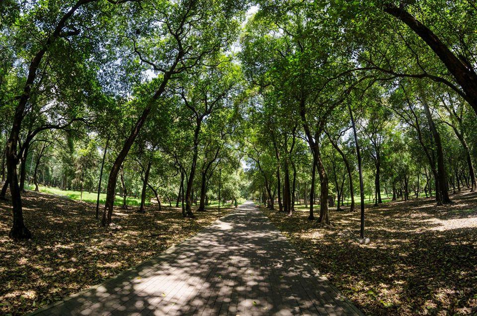 Los parques y bosques de la CDMX reabrirán muy pronto