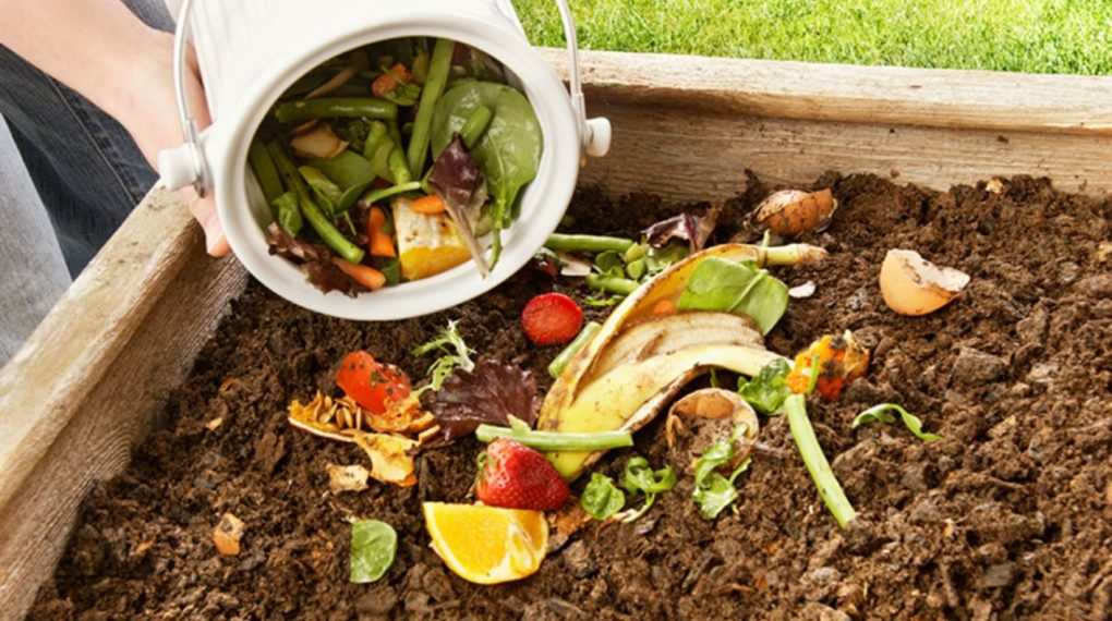 ¿Cómo hacer abono en casa?, ¿qué fertilizante compro? y más