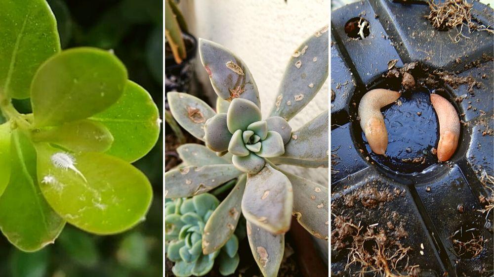 Estas son las plagas más comunes en plantas 🌱�