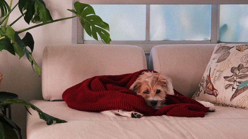 ¿Tu perro está listo para la nueva normalidad?