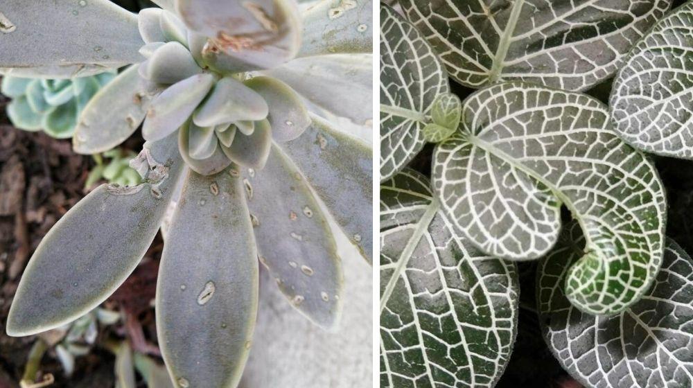 Estas son las plagas más comunes en plantas 🌱🐌